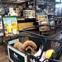 カインズ 稲沢ハーモニーランド店の写真