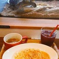 爬虫類shop&cafe ジュラの杜の写真