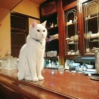 カフェ・ホートンの写真