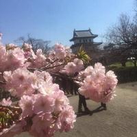 松前観光案内所 花守の写真