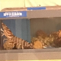 魚料理・寿司 二反田の写真