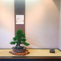 盆栽レストラン大宮の写真