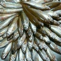 魚清楼の写真