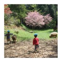 認定向山こども園ゆうぼうの丘幼稚園の写真