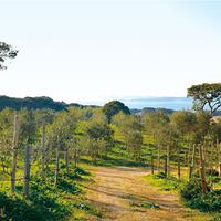 壱岐オリーブ園の写真