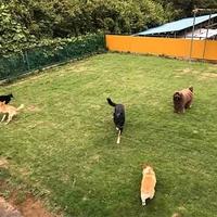 家庭犬 出張トレーニング よいわん!わん!の写真