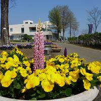 宮崎県農業科学公園ルピナスパークうまい館の写真