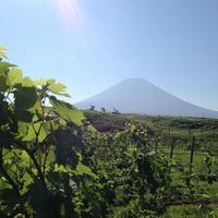 富士山ワイナリーの写真