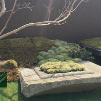 (有)大塚園芸の写真