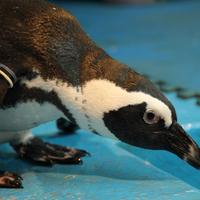 ペンギンのいるBAR池袋の写真