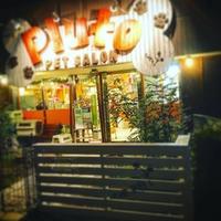ペットサロン プルート 東川口店の写真