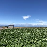 松原農園の写真