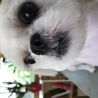 犬の床屋さんDogMamaの写真
