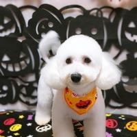 犬の美容室Passoの写真