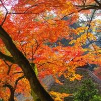 大興善寺の写真