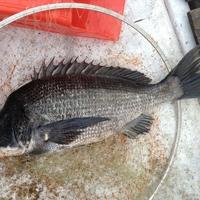 郡司釣船店の写真