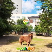 ドッグラン woodsdogの写真