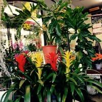 フラワーショップ 花尚の写真
