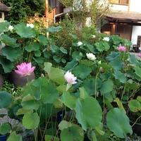 盛松寺・盛松寺霊苑の写真