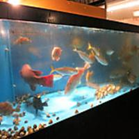 生簀料理 魚の蔵(三重四日市)の写真