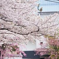 ホテル雅叙園東京の写真