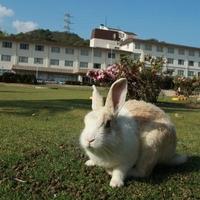 休暇村 大久野島の写真