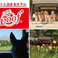 ペットと泊まる宿 ドッグリゾートWoofの写真
