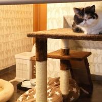 お好み焼き レストラン TEMAJI テマージの写真