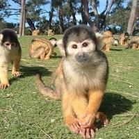 国営海の中道海浜公園動物の森の写真