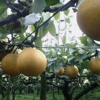 まるみ観光果樹園の写真