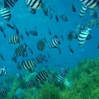 海士ダイビングサービスの写真