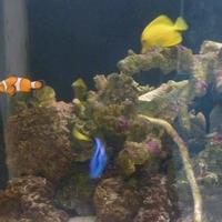 横浜市立間門小学校付属海水水族館の写真