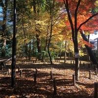 たけしたの森緑地の写真