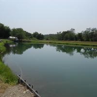 なら山沼魚場の写真