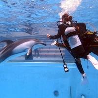 下田海中水族館ドルフィンビーチカウンターの写真