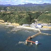 串本ダイビングパークの写真