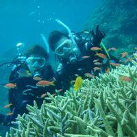 ビーブルー石垣島ダイビングサービスの写真