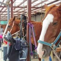 有限会社座間・近代乗馬クラブの写真
