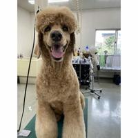 宇都宮愛犬美容学園の写真