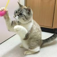 アラモード 本店【猫専用窓口】(ペットホテル)の写真