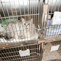 かそり動物病院(ペットホテル)の写真