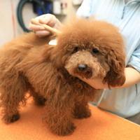 lovelydog.CHALO(ホテル)の写真