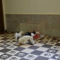 老犬ホーム ぱーとなーの写真