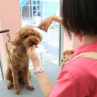 ライズ動物病院の写真