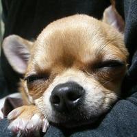 トリミングサロン mam's dogの写真