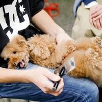 犬幸村の写真