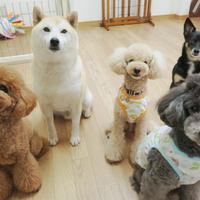 Dog House 陽だまりの写真