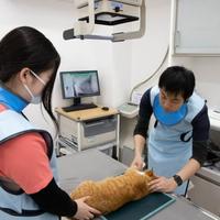 ラピス動物病院の写真