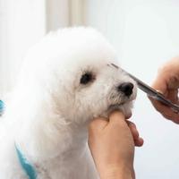 DOG SALON +Wanの写真