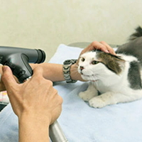 本田動物病院の写真
